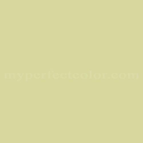 Match of Ace™ B30-4 Yellow Grass *