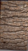 Match of 